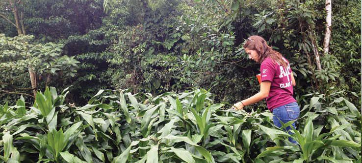 A volunteer monitors vegetation.