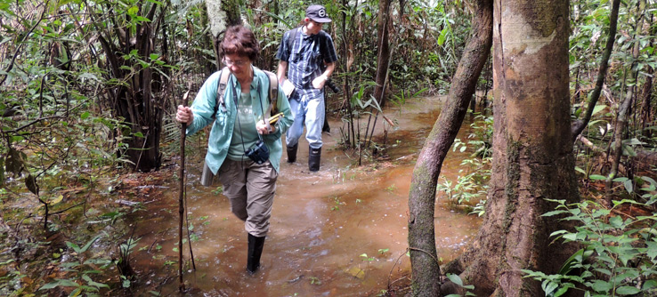 Volunteers trek through the rainforest to survey wildlife.