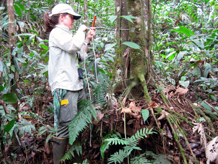 Dr. Vanessa Boukili sampling the wood of trees in Costa Rica.