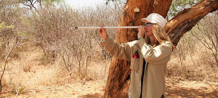 A volunteer engages in a wildlife survey on Tracking Predators of the African Savannah