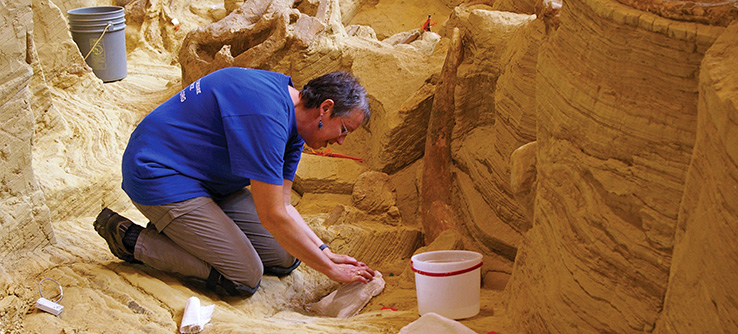 Research volunteer excavating Columbian mammoth remains