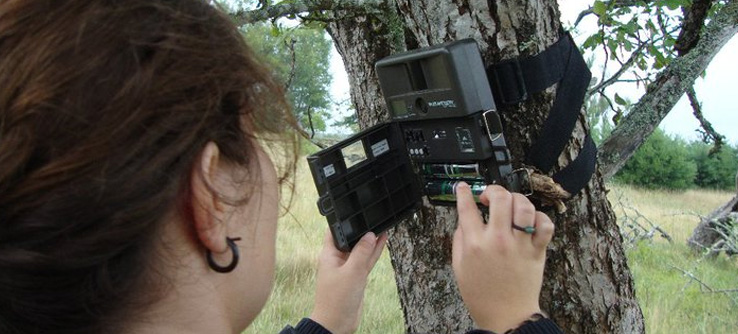 Camera trap attached to tree