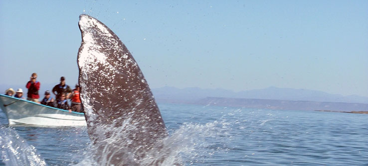 Earthwatch Expeditions: Whales and Dolphins Under the California Sun