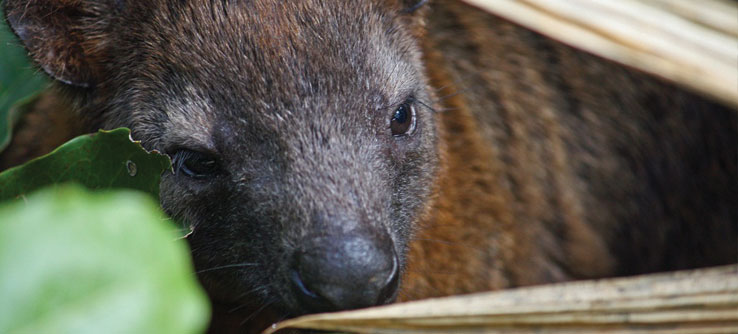 Earthwatch Expeditions: Wildlife of Australia's Rainsforests