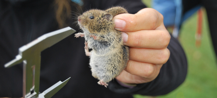 You'll help take measurements of small mammals.
