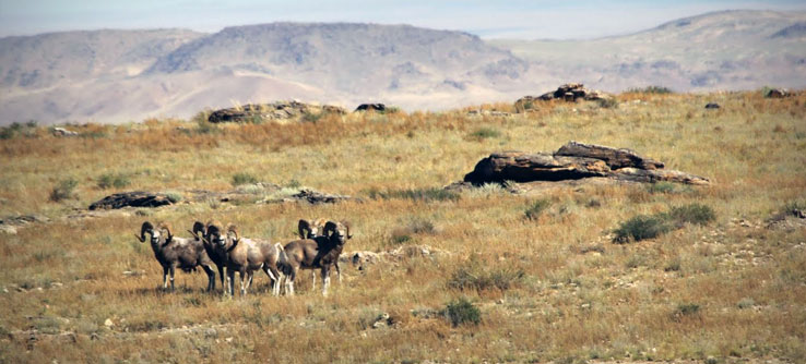 Earthwatch Expeditions: Wildlife of the Mongolian Steppe