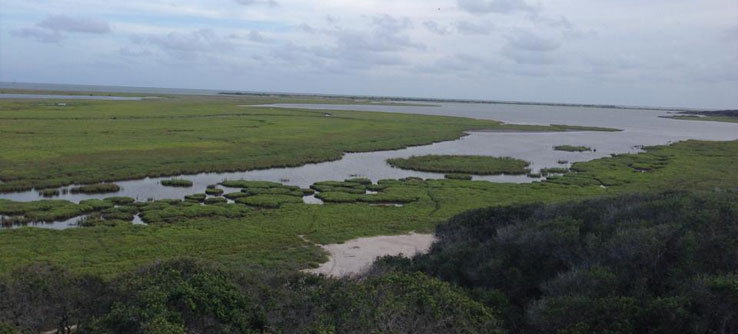 The Aransas National Wildlife Refuge in the Texas Gulf Coast.