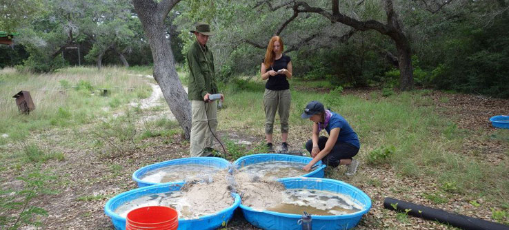 The team conducts experiments on blue crab behavior – a food source for cranes.