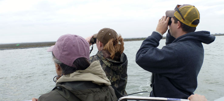 Volunteers monitor the cranes from a boat and record their behavior.