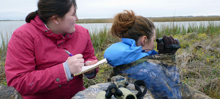 Volunteers record Whooping Crane foraging, behavior, territory defense, and movement behavior.