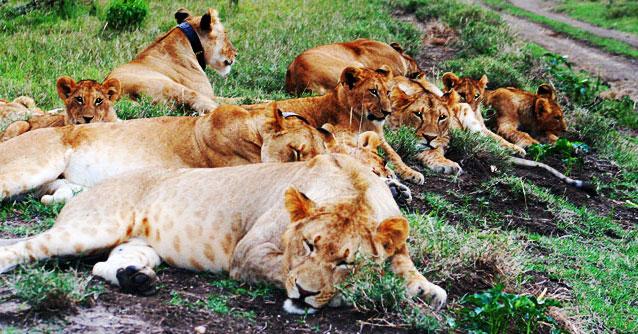 volunteer abroad wildlife volunteer opportunities