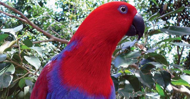 Australian Rainforest Locations Wildlife Of Australia's Rainforest