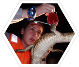 Research scientist measuring a caiman