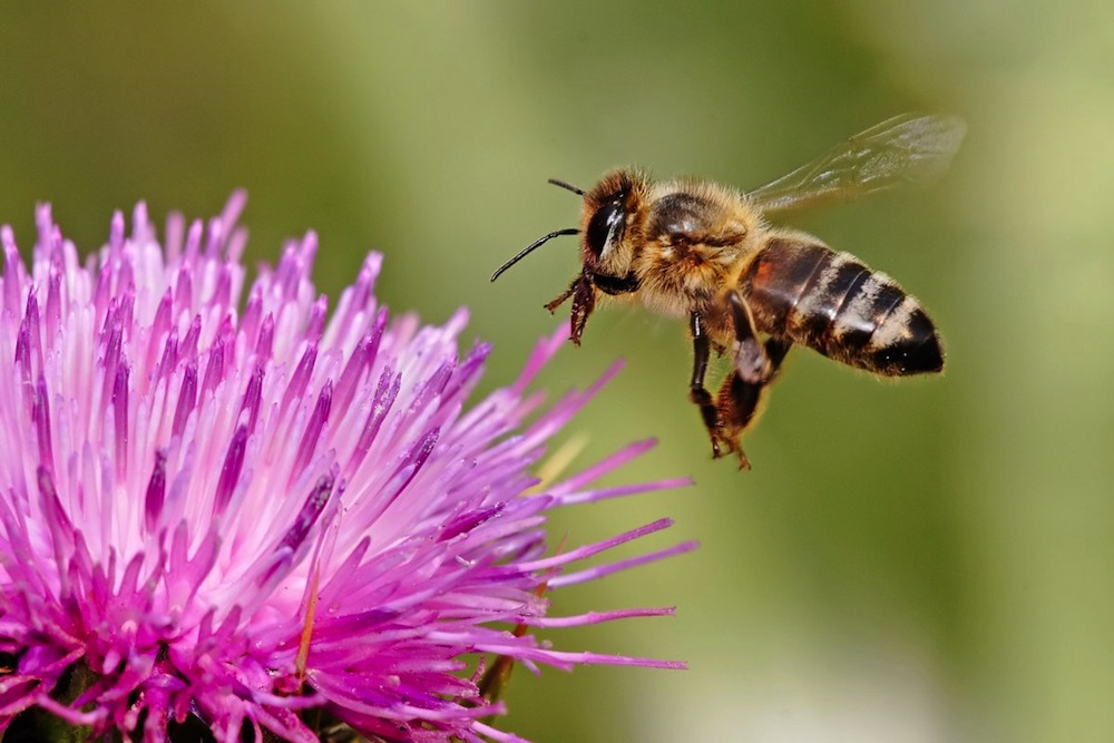 Why The Bees Are Still In Crisis