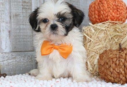 Pets For Sale Ohio For Sale Listings Free Classifieds Ads Freeclassifieds Com