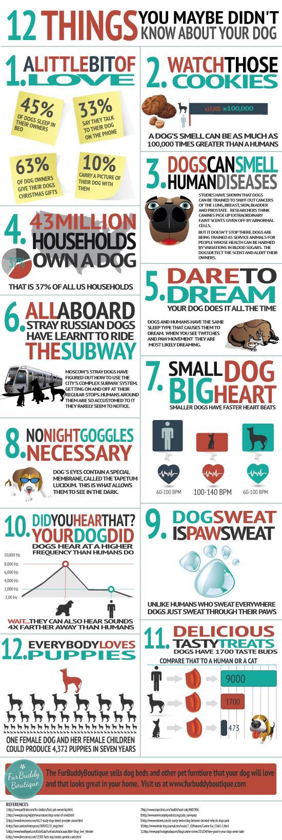 Dog-Infographic