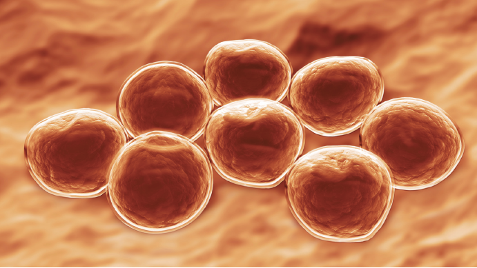 Sulfamethoxazole-Trimethoprim for Skin and Soft Tissue ...