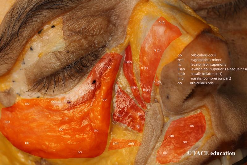Derm01_Fig2_Cosmetic%20Clinic_FIg%202_Mi