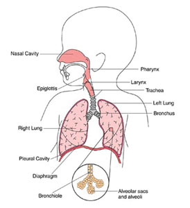 Pediatric Wheezing and Stridor | EMS World