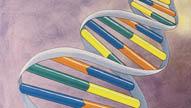 Genetics I: Fundamentals of DNA