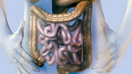 Systems of the Body: Digestion