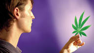 Myths of Marijuana Debunked