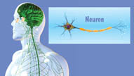 Systems of the Body: The Nervous System