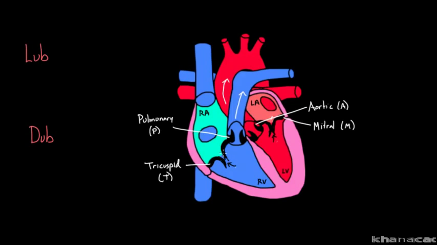 cardiovascular system diagram cake ideas and designs 2001 lincoln town car fuse box diagram my wallpaper #7