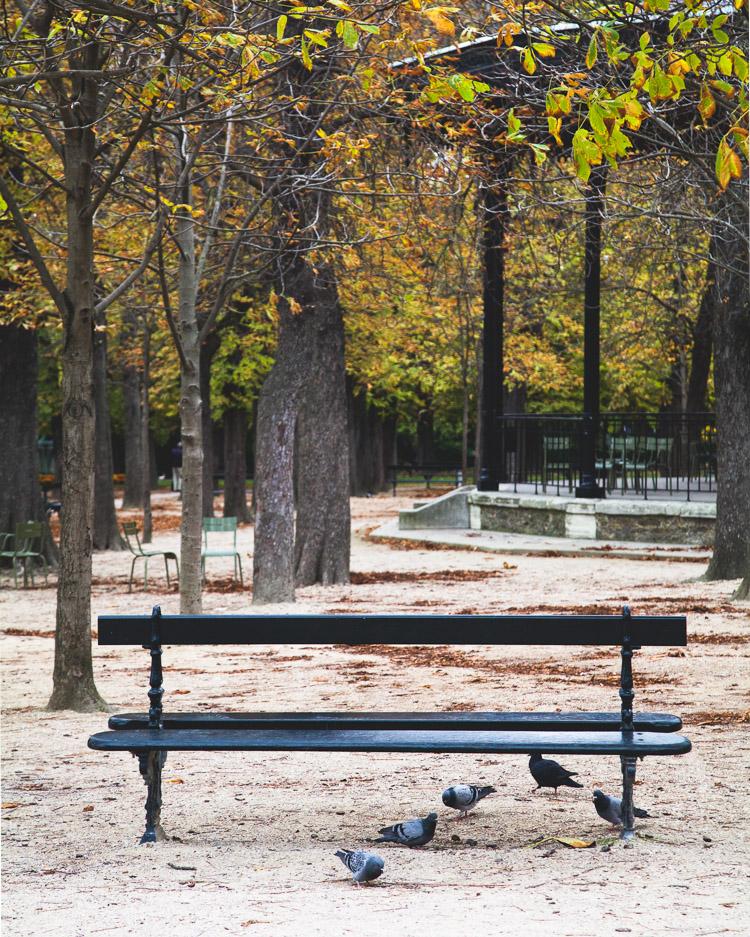 Autumn in Paris Luxembourg Gardens