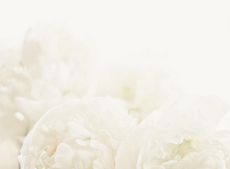White Peonies