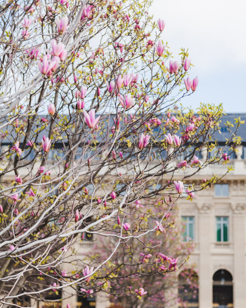 Paris Spring Jardin du Palais Royal