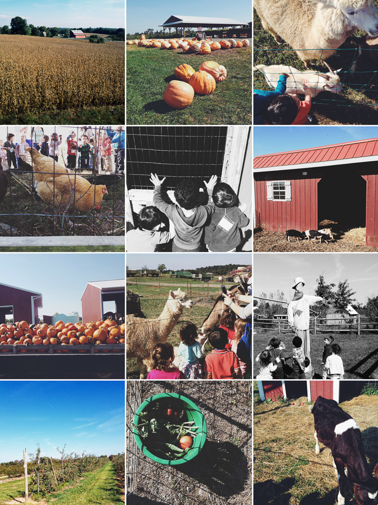 A visit to the farm with children