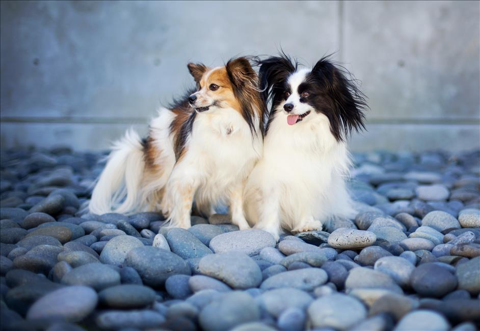 5 Tips for Taking Amazing Photos of Your Dog // Amiee Stubbs Pet Photography // Nations Photo Lab Celebrates National Dog Day