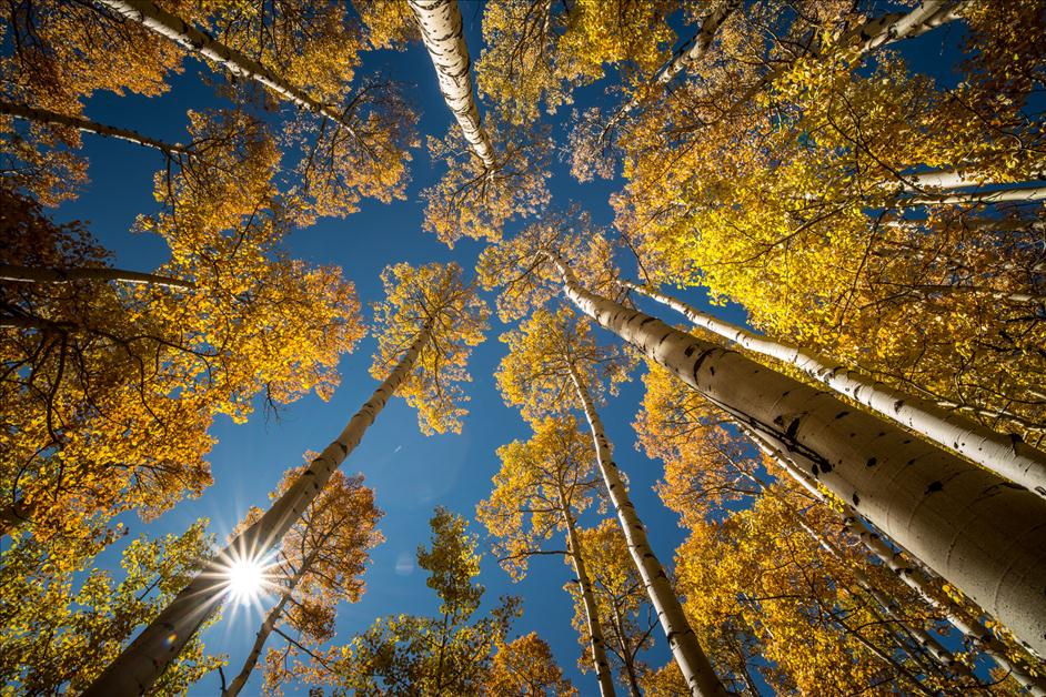 Aspen Trees in Colorado // Matt Kloskowski's Favorite Places for Landscape Photography // Nations Photo Lab