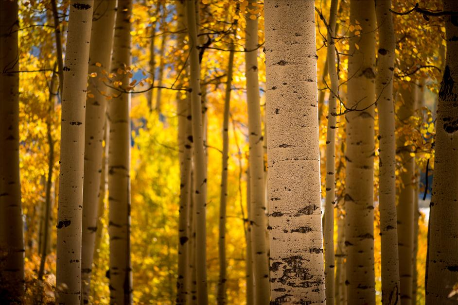Dallas Divide Colorado // Matt Kloskowski's Favorite Places for Landscape Photography // Nations Photo Lab
