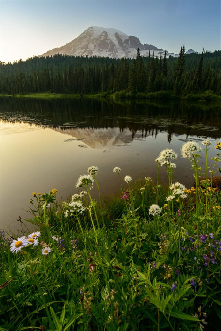 Mount Rainier Wildflowers// Matt Kloskowski's Top 5 Landscapes to Photography // Nations Photo Lab