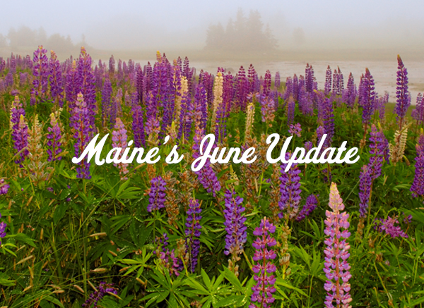 Maine's June Update