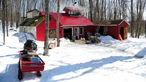 Maine maple sugar shack