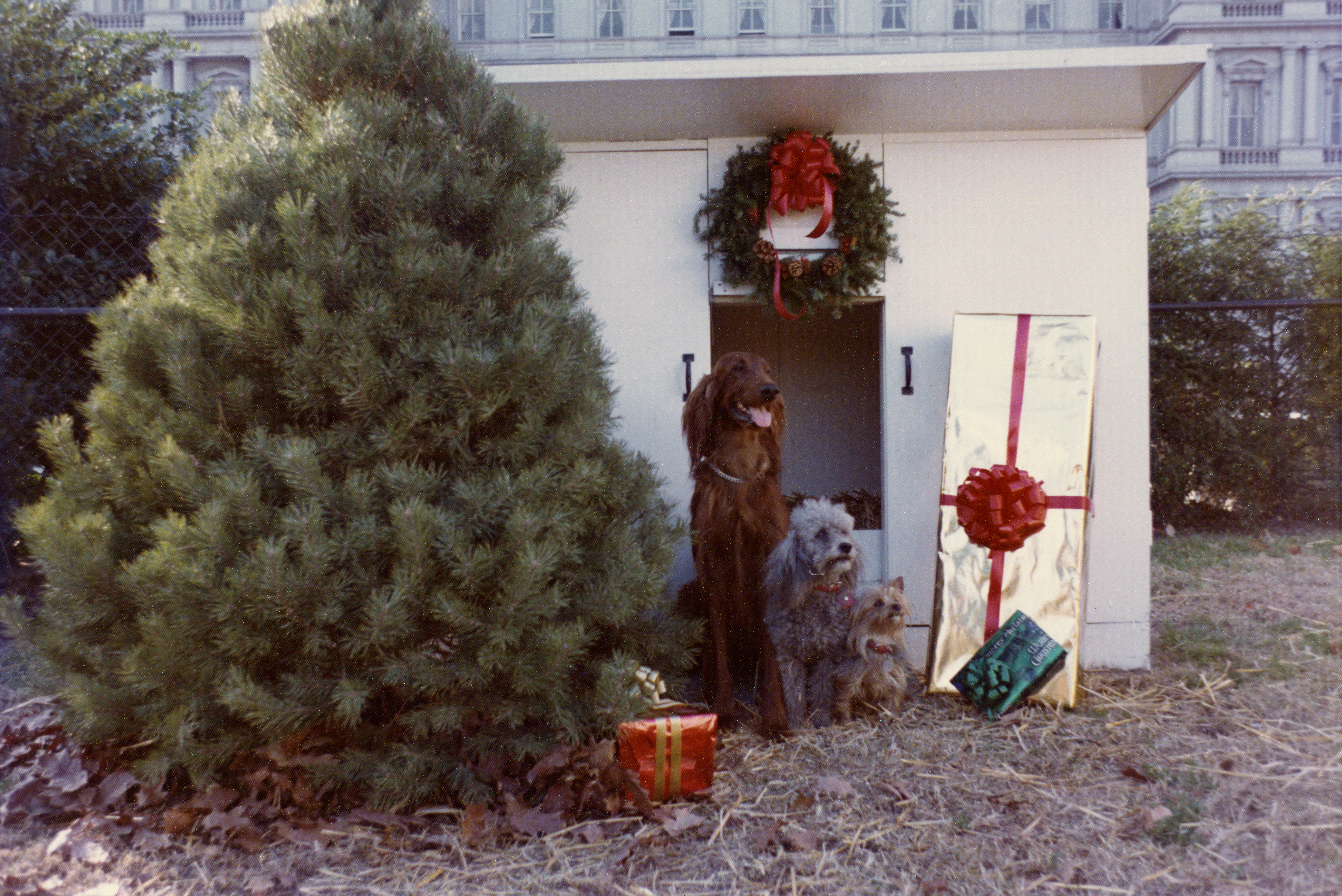 Nixon Family Dogs with Christmas Presents in Front of a Dog House