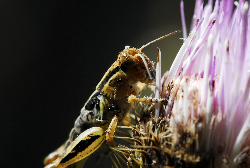 Grasshopper Eating