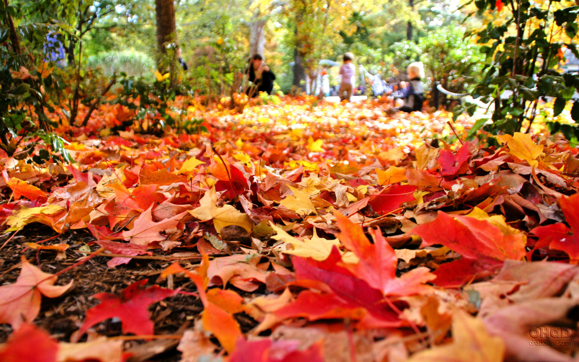 Join us this fall for a guided trip through western  Maine's fall foliage.
