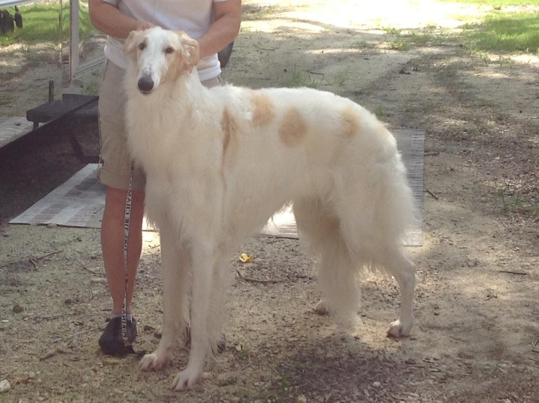 One of the many breeds shown by Kay