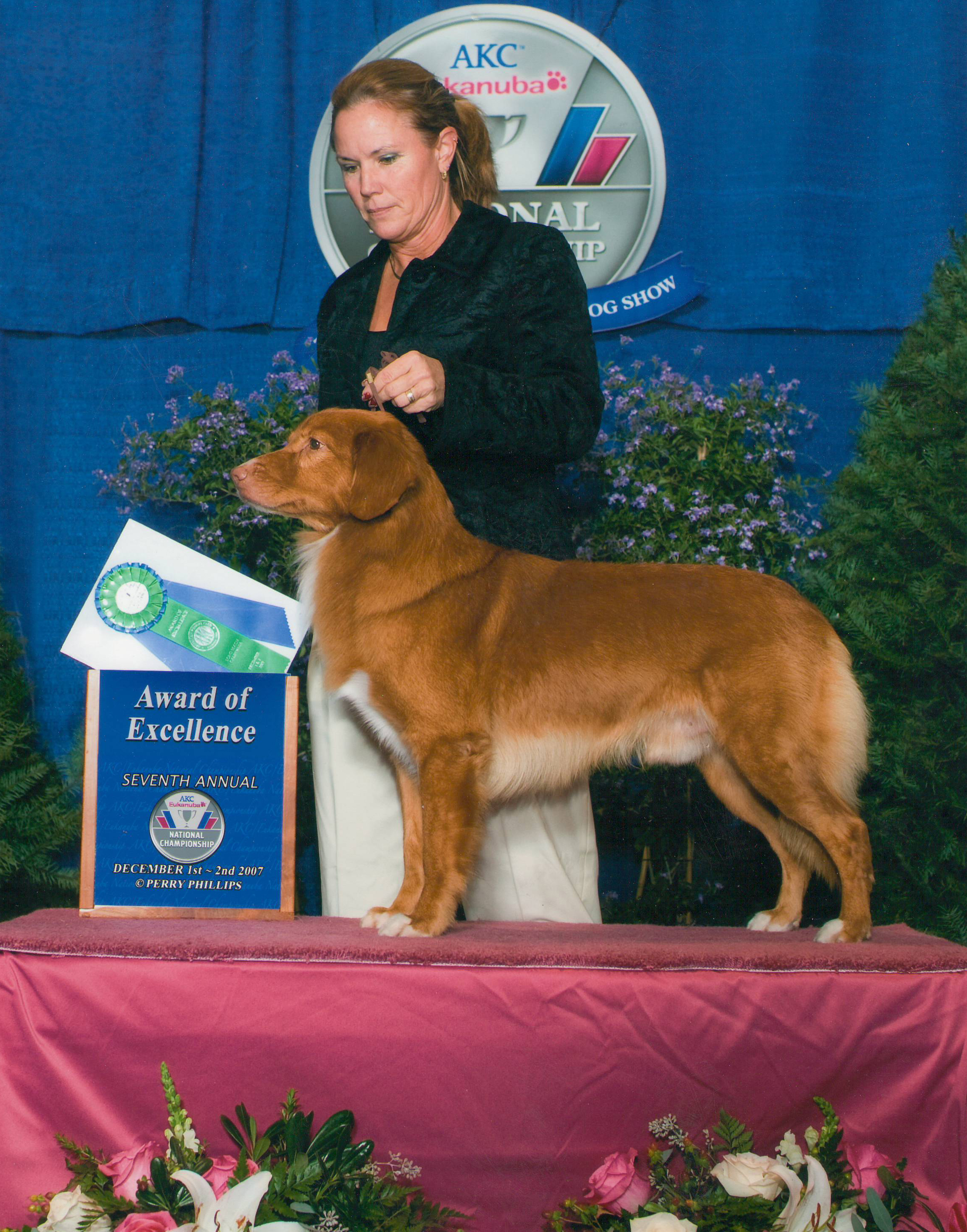 Multiple Group Winner GCH Cinnstar Kd's Red Tornado CD-
