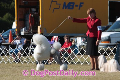 Show Dog Training  Page