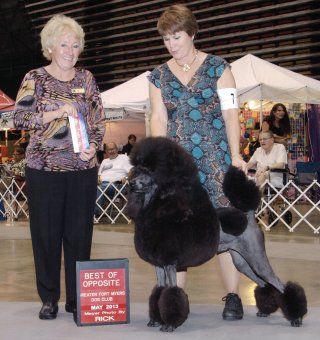 Standard Poodle Puppies Page