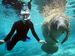 Crystal River Manatee and friend