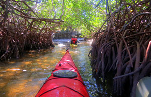 An Image of A woman in a kayak on the Great calusa Blueway trip