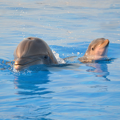 Photo credit: Marineland Dolphin Conservation Center