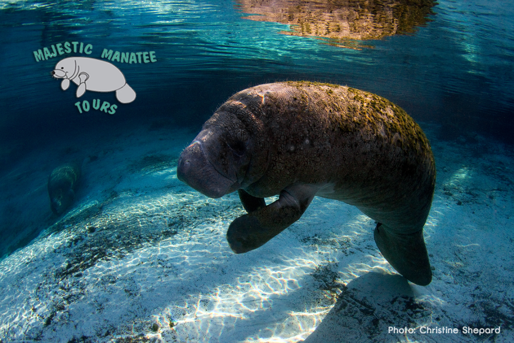 About Manatees Page
