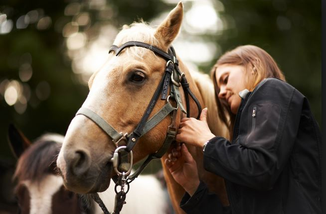 Equine Assisted Coaching  Page